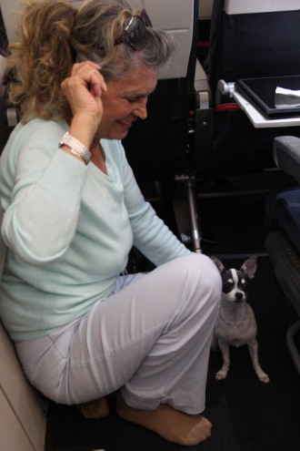 Turkish woman with little dog on board during flight to Istanbul.